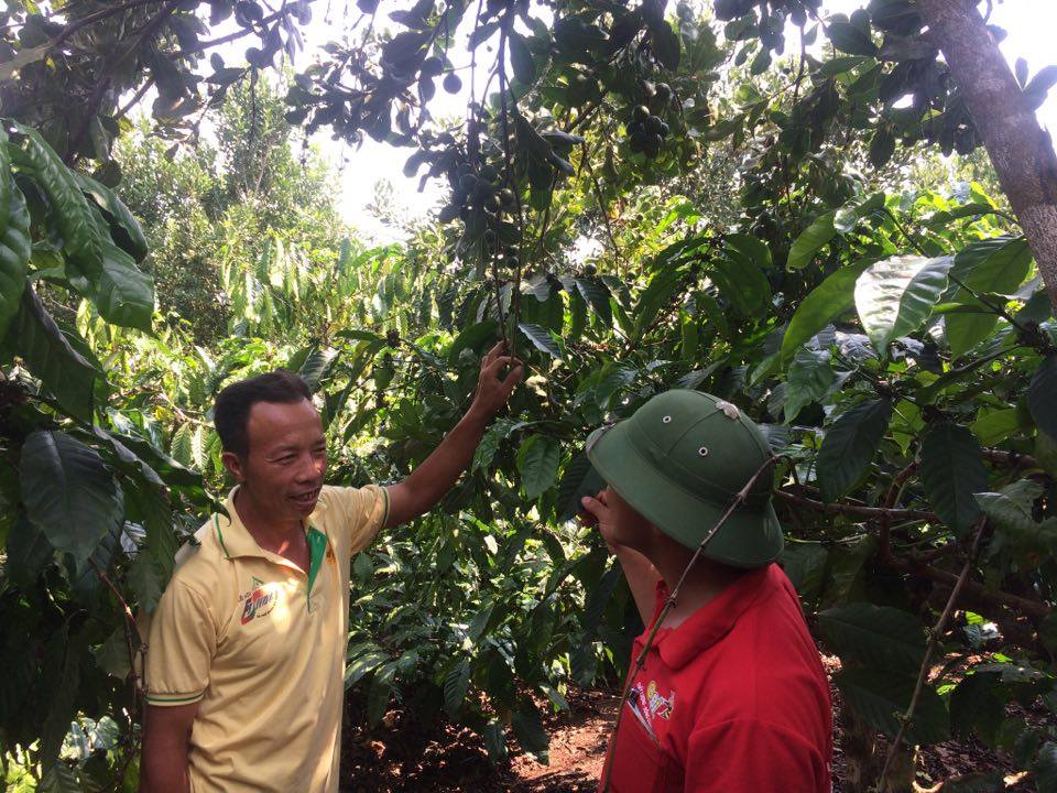 Anh Ngô Quang Lập (trái) đang giới thiệu về mô hình trồng xen canh với người dân đến tham quan.